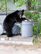 """""""Fed Bears are DeadBears"""""""